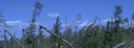 bwca windstorm