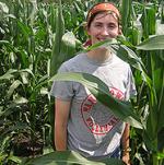 corn high