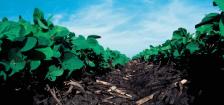 USDA image