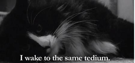 Walker Art Center cat video