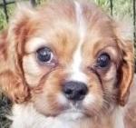 Condo companion dog