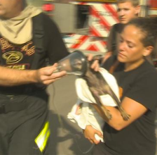 dog rescued in fire