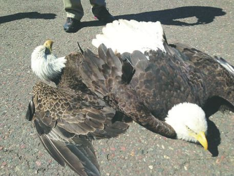 Duluth eagles