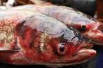asian carp in congress_wide-eccf32e0c15c471853d13ff0cfccf5f39812999c-s6-c30.jpg (948×533)
