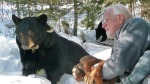 Dr. Lynn Rogers with bear in Ely (photo -- North American Bear Center)