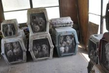 North Dakota puppy mill dogs