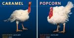 Minnesota turkeys popcorn and caramel
