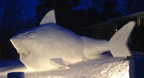 great white snow shark