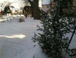 snow winter ben grove image (green)