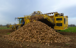 sugar beet harvest (green)