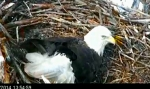 eagle cam screenshot green