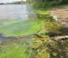 green algae, green photo, mpca