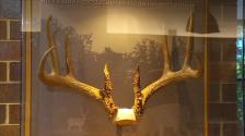 Record 8-point rack