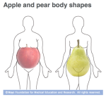 abdominal obesity, mayo, apple