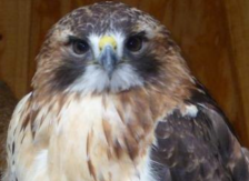 from the raptor center