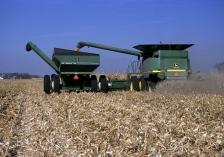 corn harvest minnesota GREEN