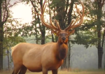 elk (green)