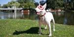 Target-bullseye-boston