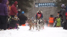beargrease sled dog marathon 2015 start