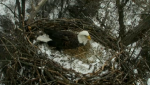 eaglecam-eagle-season-3