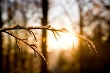 ISTOCK GETTY REUSE OK-warm-winter-sun