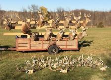 Minnesota DNR antlers seized