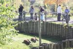 duluth-zoo