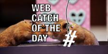 Hamsters-webcatch