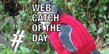 penguin-wearing-sweater-web-catch