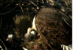 Eaglecam screengrab