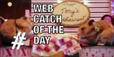 Web catch 0214