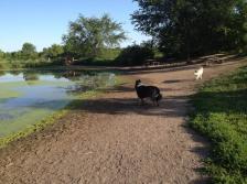 150327_Elm Creek dog park
