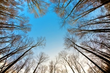 ISTOCK - OK TO REUSE - SPRING SUN TREES