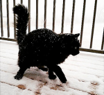 cat-snow-jenniferloisrygg-instagram