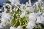 iStock_snow-melting-grass-spring