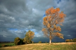 iStock_windy-tree-clouds