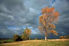 iStock_windy-tree-clouds