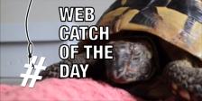 tortoise hibernation wake up overlay