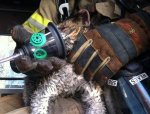 cat-pet-oxygen-mask-fire