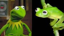 frog-kermit-today-1-150420_d8b43a6b2c3e826423b6bf0bd32cf44e.today-inline-large
