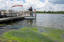 Algae lake, Minnesota