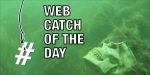 AZ Web Catch