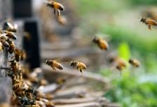 iStock_bee-colony
