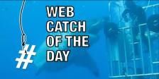 Shark Web Catch