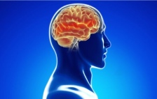 Brain in a body illustration