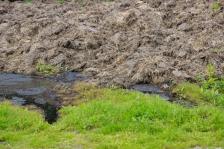 iStock OK TO REUSE _farm-manure