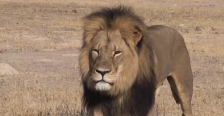 cecil the lion screengrab