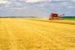 istock_farm-harvest-wheat