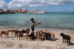 stray-dogs-mexico