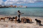 stray-dogs-mexico